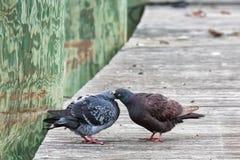 Tauben, die auf Dock sich einziehen lizenzfreie stockfotografie