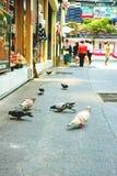 Tauben, die auf eine Stadt-Straße einziehen Stockfotos