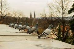 Tauben, die auf einem Dach sitzen Lizenzfreies Stockbild