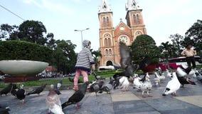 Tauben, die auf einer Straßenpflasterung sich einziehen stock footage
