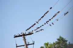 Tauben, die auf elektrischem Draht stillstehen Stockfotos