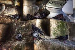 Tauben, die in der alten, grungy städtischen Steinmetzarbeit roosting sind Stockbilder