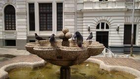 Tauben, die im Wasserpool stillstehen stockfoto