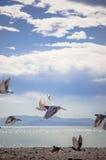 Tauben am Strand Lizenzfreies Stockfoto