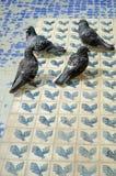 Tauben in einem Brunnen Stockbild