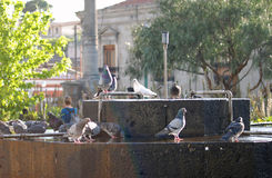 Tauben in einem fontaine I La Antigua Guatemala Lizenzfreie Stockfotos
