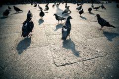 Tauben in einer Stadt Stockfotos