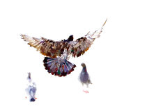 Tauben fliegen Stockfotos