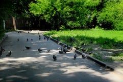 Tauben gehen auf den Bürgersteig stockfotografie