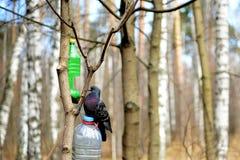 Tauben-im Frühjahr Park Lizenzfreie Stockfotos