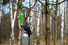 Tauben-im Frühjahr Park Lizenzfreie Stockfotografie