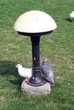Tauben im Park, der nahe Parklampe steht Stockbilder