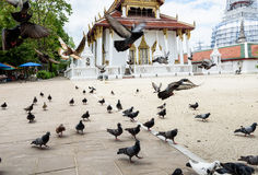 Tauben im Tempel Stockfotografie