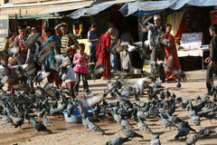 Tauben in Kathmandu, Nepal Stockfotografie