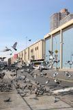 Tauben in Manhattan Stockfotografie