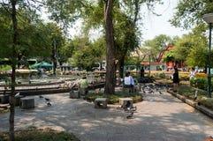 Tauben in Sanam Luang Bangkok, Thailand Lizenzfreie Stockbilder