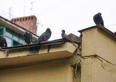 Tauben sitzen auf dem Dach des Hauses Stockfotografie