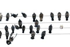 Tauben sitzen auf Drähten Stockfotos