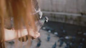 Tauben sitzen auf Frau ` s Hand und Versuch, um Lebensmittel zu erhalten Langsame Bewegung Frau zieht Vögel in der Straße an eine stock video footage