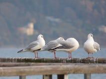 Tauben stehen still lizenzfreies stockbild