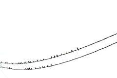 Tauben - Taube Lizenzfreie Stockbilder