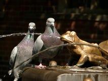 Tauben und Frösche Stockfotos