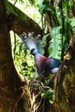 Tauben-Vogel Stockfotos