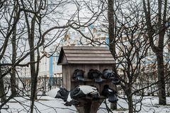 Tauben vor dem Palast in Tsarscoe-selo, Pushkin, Heiliges Stockfotografie