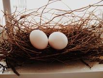 Taubenei im Nest Stockfotografie