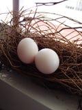 Taubenei im Nest Lizenzfreies Stockbild
