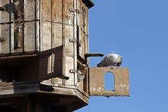 Taubenschlag (Taubenhaus) Stockbild