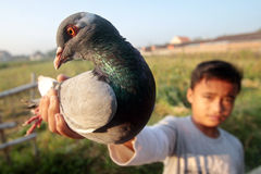 Taubenvögel Lizenzfreies Stockfoto