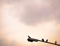 Taubenvögel auf sich verjüngender Straßenbeleuchtung Pol Lizenzfreies Stockbild