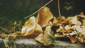 Tauber Blatt-Hintergrund mit grünen Blättern Lizenzfreies Stockbild