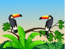 Taucan birds Royalty Free Stock Images