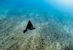 Tauchen auf Maldives Stockbilder