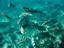 Tauchen in den Karibischen Meeren Stockfotos
