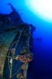 Tauchen im Roten Meer Lizenzfreie Stockfotografie