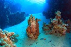Tauchen im Roten Meer Stockfoto