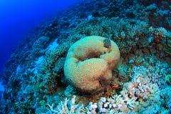 Tauchen im Roten Meer Stockbilder