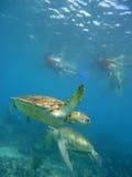 Tauchen mit Schildkröten Lizenzfreie Stockfotos