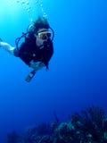 Taucher über dem Riff Stockbilder