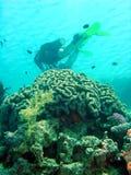 Taucher über Koralle stockbild