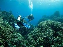 Taucher über Korallenriff Stockbilder