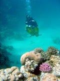 Taucher über Korallenriff Stockfotos