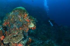 Taucher auf Korallenriff Stockfotos