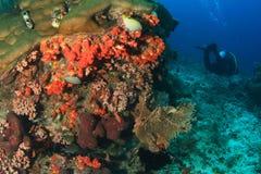 Taucher auf Korallenriff Lizenzfreies Stockbild