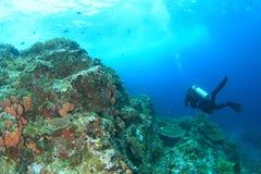Taucher auf Korallenriff Stockfotografie
