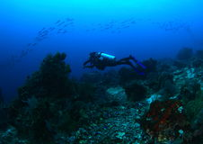 Taucher auf Korallenriff Lizenzfreies Stockfoto