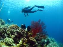 Taucher über seafan und Korallen Lizenzfreies Stockfoto